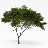 3ds max deciduous 014