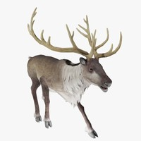 3d model reindeer animal