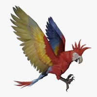 3d parrot animal rigged