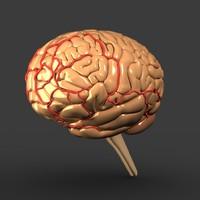 brain head 3d model