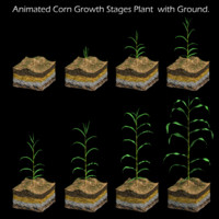 Corn Growth Plant  with Ground