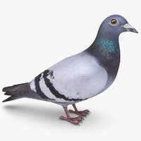 3d model pigeon scanline
