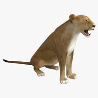 3d lioness pose 4