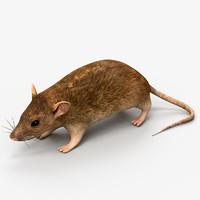 rat mouse 3d model