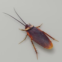 3d model of cockroach modeled