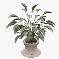 3d max plant