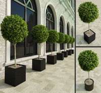 Plants for Restaurant & Hotel outdoor
