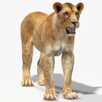 obj lioness modeled