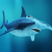 hammerhead shark 3d dxf