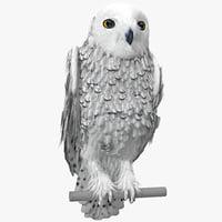 Snowy Owl Pose 2