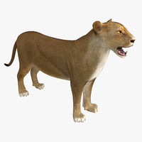 3d model of lioness rigged