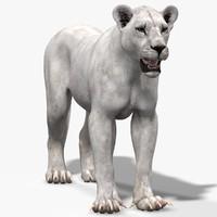 lioness white lion 3d max