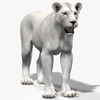 maya lioness white lion