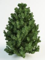 3d black pine model