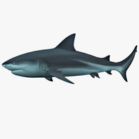 3d tiger shark model