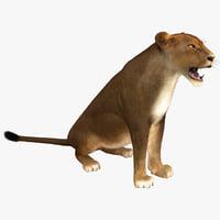lioness pose 4 fur 3d model