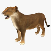 3d model of lioness rigged fur