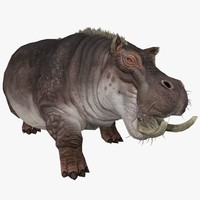 3d hippopotamus animal rigged model