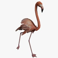 3d flamingo animal video model