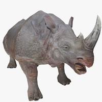 3d rhino animal model