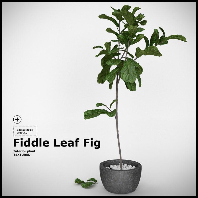 Fiddle Leaf Fig_cover.jpg