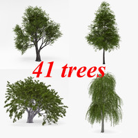 deciduous ersion 3d model