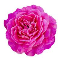 Flower 24