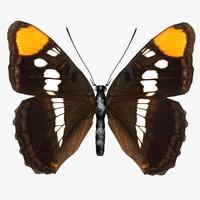 3d model adelpha bredowii butterfly