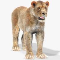 lioness fur 3d max