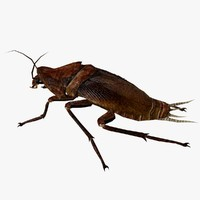 cockroach roach 3d model