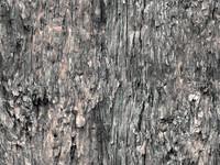 tree bark 4