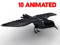 3d animate crow