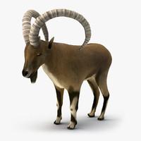 3d model ibex