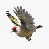 european gold finch lwo
