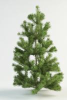 3d scots pine