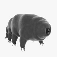 3d tardigrade water bear model