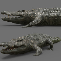 crocodile croc cro 3d model