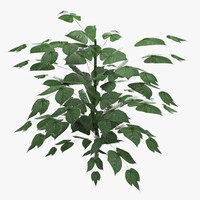 3d ready plant model