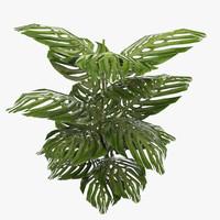 3d model ready plant