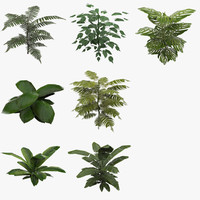 groundplant plant 3d model