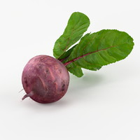 3d realistic beetroot real vegetables model