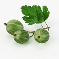 realistic gooseberry real 3d model