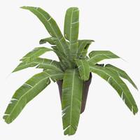 ma plant pot