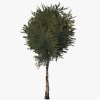 3dsmax birch tree