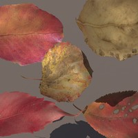 3d model autumn leafs pack