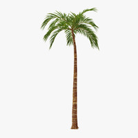 max palm 03