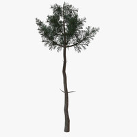 3ds max conifer tree