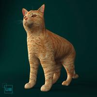 cat animal 3d max
