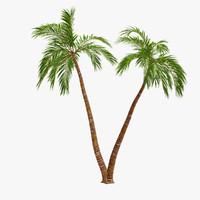 palm 09 3ds