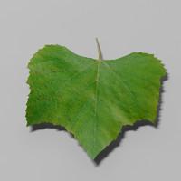 nature leaf 3d model